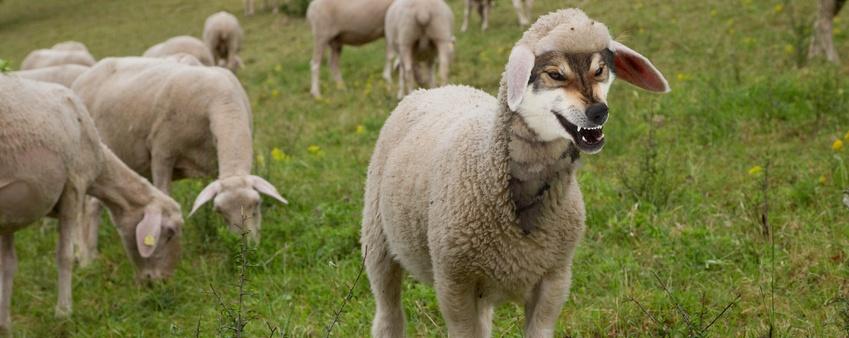 infoguard-cyber-security-wolf-im-schafspelz